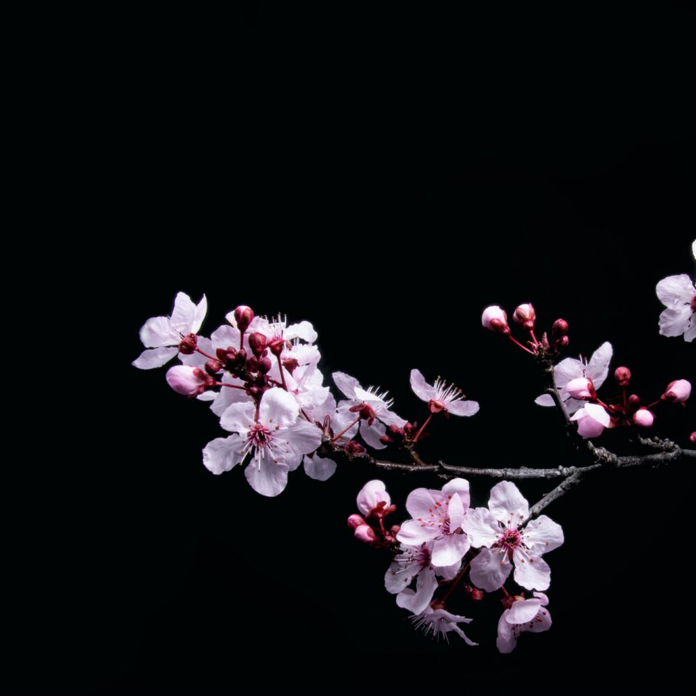 Spring Forest Qigong – ONLINE 6/28/21